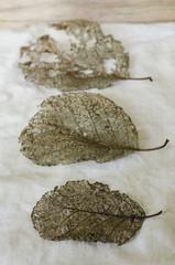 rustic leaf skeletons