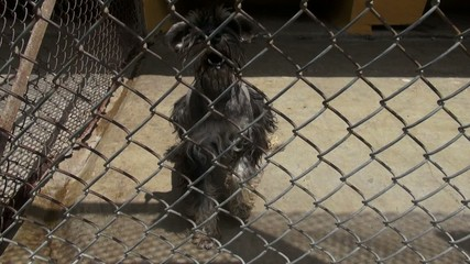 Caged Dogs, Barking, Canines, Neglect, Abuse