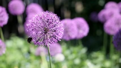Цветок и шмель