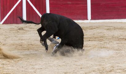 Cojida de un torero por un toto