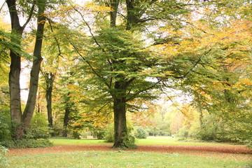 Englischer Garten in München im Herbst
