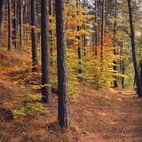 Jesienny las na Mazurach