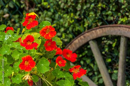 canvas print picture Gartengestaltung