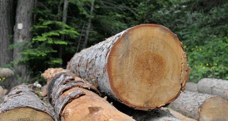 débardage,tronçonnage avant l'hiver,forestier