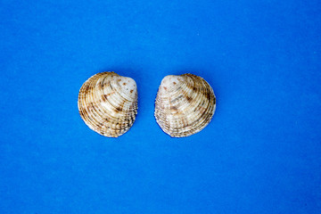 two shell on the blue background