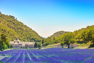 Abbey of Senanque blooming lavender flowers. Gordes, Luberon, Pr