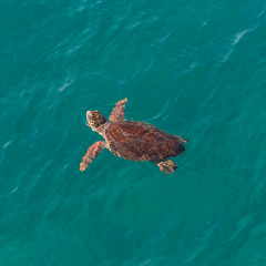 Big sea turtle in Mediterranean sea neaby Antalya, Turkey
