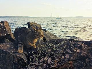 Un gatto sugli scogli al lago