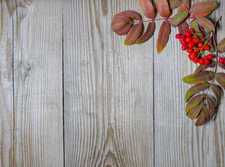 Ashberry decoration on wood background