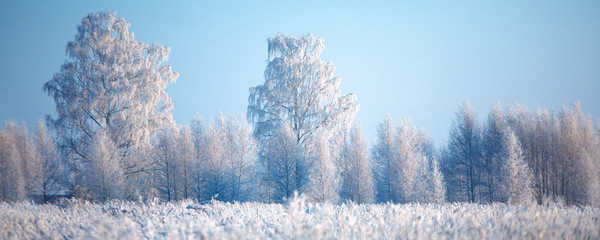 Frosted trees and grass against a blue sky