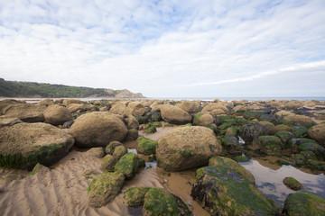 Natural coastal environment image