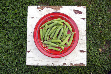 fresh green pea pods in red plate on seat