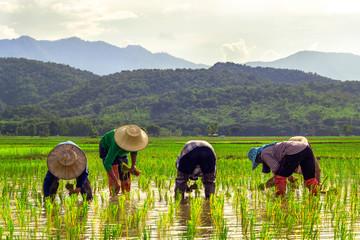 four framer in thailand
