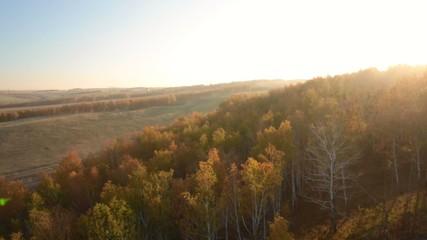 Поле, лес ранней осенью на рассвете