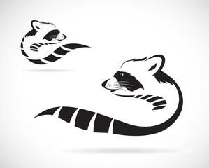 Vector image of a raccoon on white background