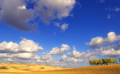 Tra Puglia e Basilicata.Paesaggio collinare:uliveto.ITALIA