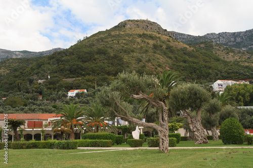 Tuinposter Olijfboom Beautiful park with olive trees. Montenegro