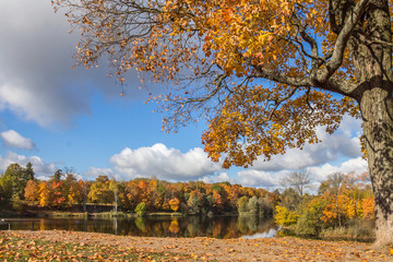 старое дерево осенью на берегу озера