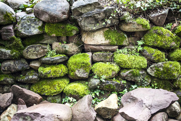 Pared de piedra con musgo