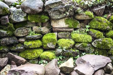 Pared de piedra con musgo