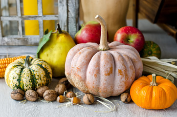 Autumn harvest composition cashow, pumpkin, fruits, vegetables