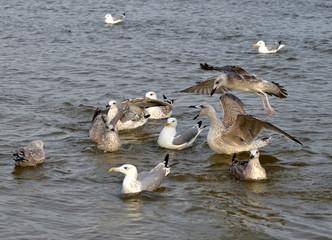 Morskie ptaki
