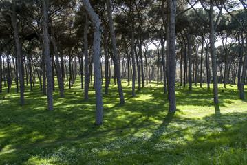 parco di villa Doria Pamphili