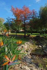 Torremolinos, parque en otoño, aves del Paraíso