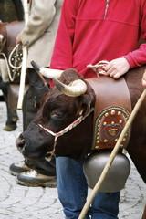 Vacca e pastore