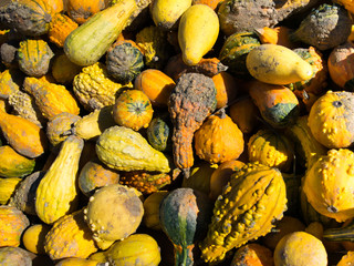 Harvest_Gourds
