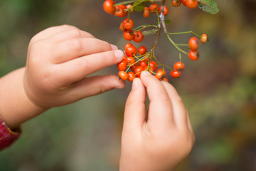 赤い実を触る子供の手