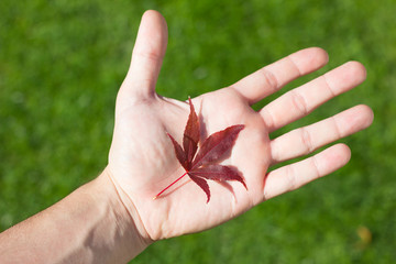 Red Leaf In Hand On Green Background