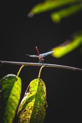shot of beautiful dragonfly sitting on tree leaf