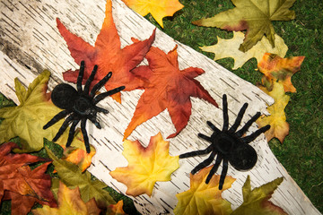 Spiders on Fall Leaves