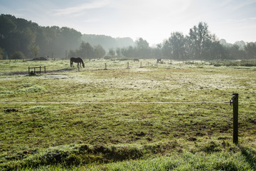 Grazing brown horses in early morning light