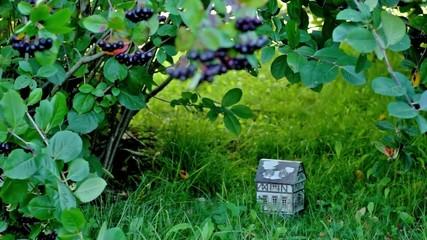Toy house under chokeberry bush shelter