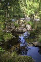 Beautiful stream flowing through forest landscape in Summer