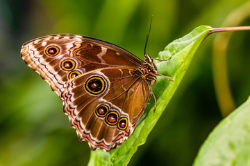 Nice tropical butterfly.