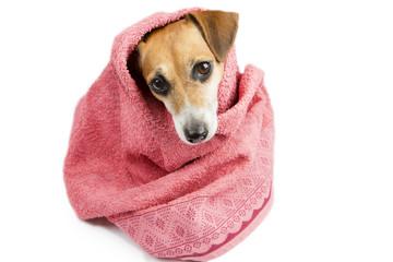 Bathroom washed dog