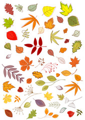 Autumn leaves and inflorescences