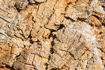 Natural texture. Old wood of felled tree
