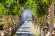 Leinwanddruck Bild - Jardines de Alfabia, Mallorca
