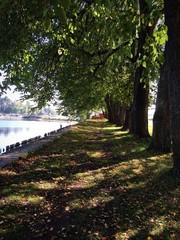 аллея у озера Селигер