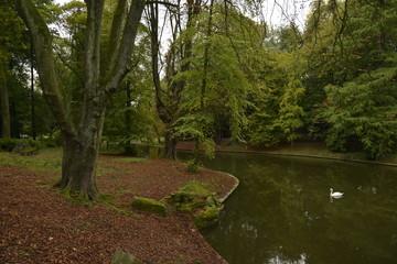 Tapis de feuilles sur les rives de l'étang du parc Josaphat