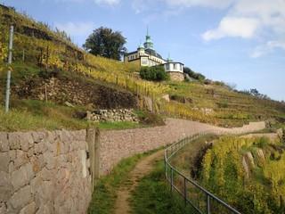 Spitzhaus Radebeul, Weinhang
