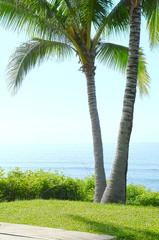 Cconut Trees