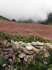 Monsoon Clouds Covering a Himalayan Buckwheat Field