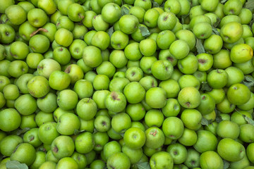 Green apples background