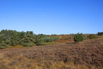 farndale moorland landscape