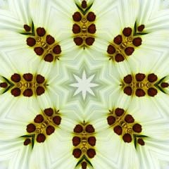 Mandala Kaleidoscopic design. Purple Flower Center Macro Close-u